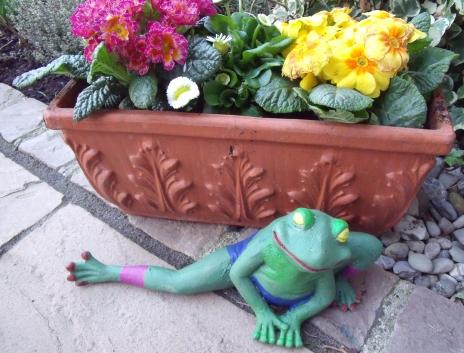 Ein neuer Frosch ist in der Stadt.